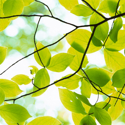 tree-leaves-2