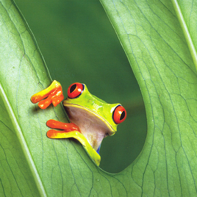 len-frog