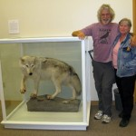 Science faculty in the Science Studio with Canis lupus (Gray wolf)