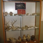 A portion of the department's skull collection