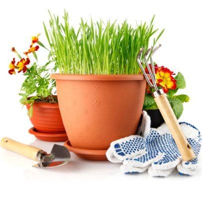 Plant Sale GCC event