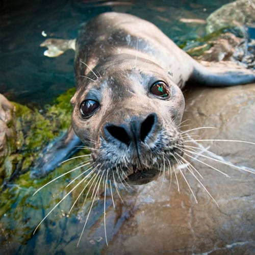 New England Aquarium Virtual Marine Mammal Encounter