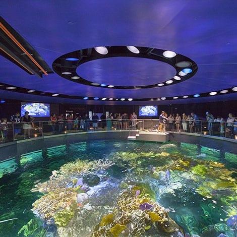 New England Aquarium Virtual Giant Ocean Tank Encounter